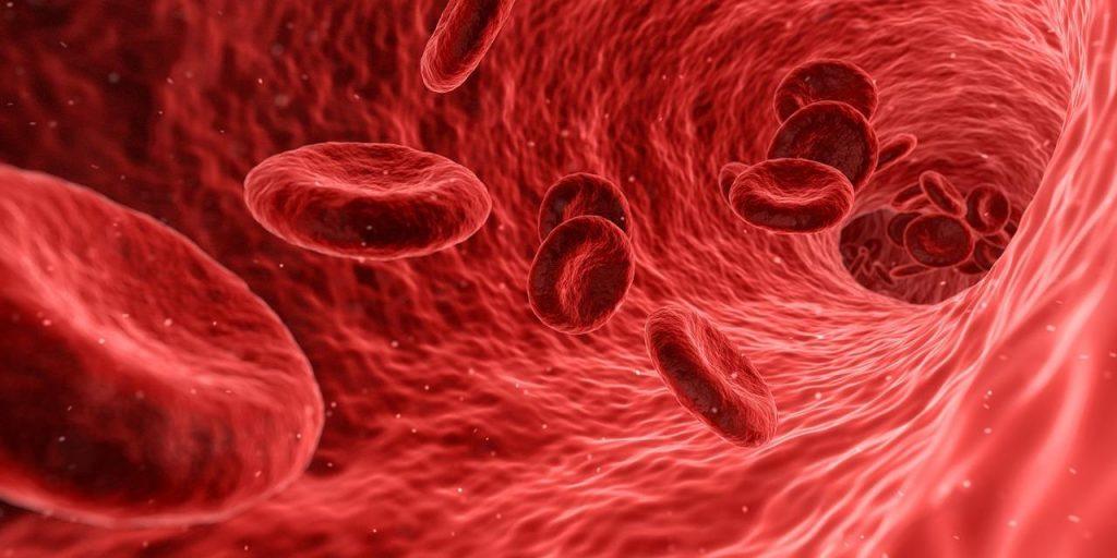 blood lipid profile