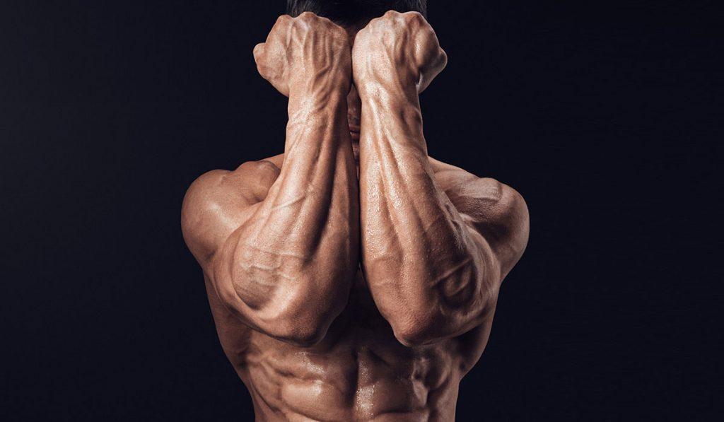 bodybuilders back muscles